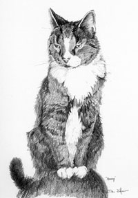 """Harry the Cat"" a pet portrait by Dan D'Amico"