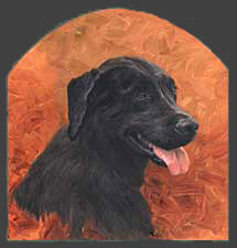 """Shadow"" a pet portrait by Dan D'Amico"